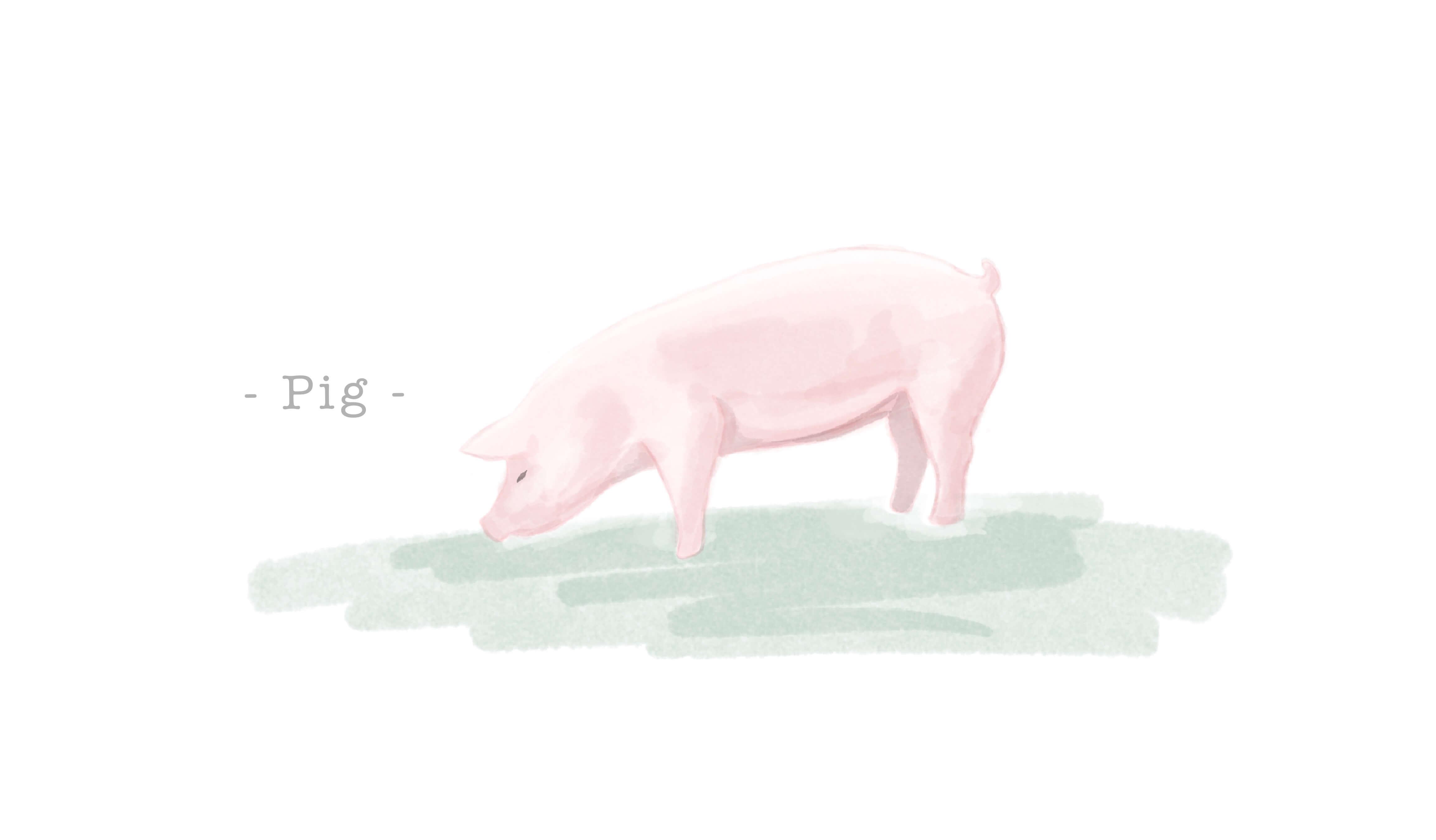 豚革(ピッグスキン)