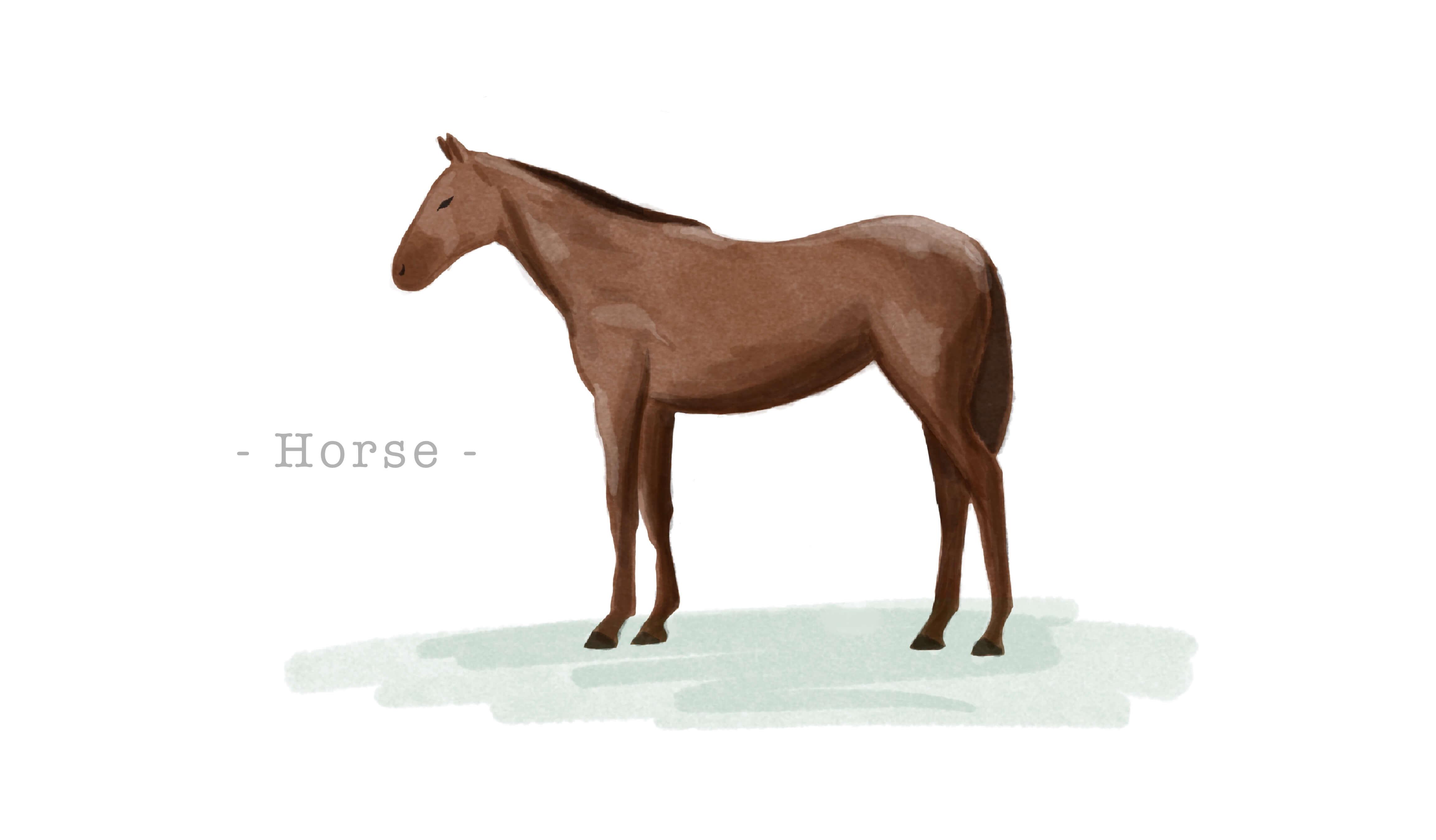 馬革(ホースハイド・ホースレザー)