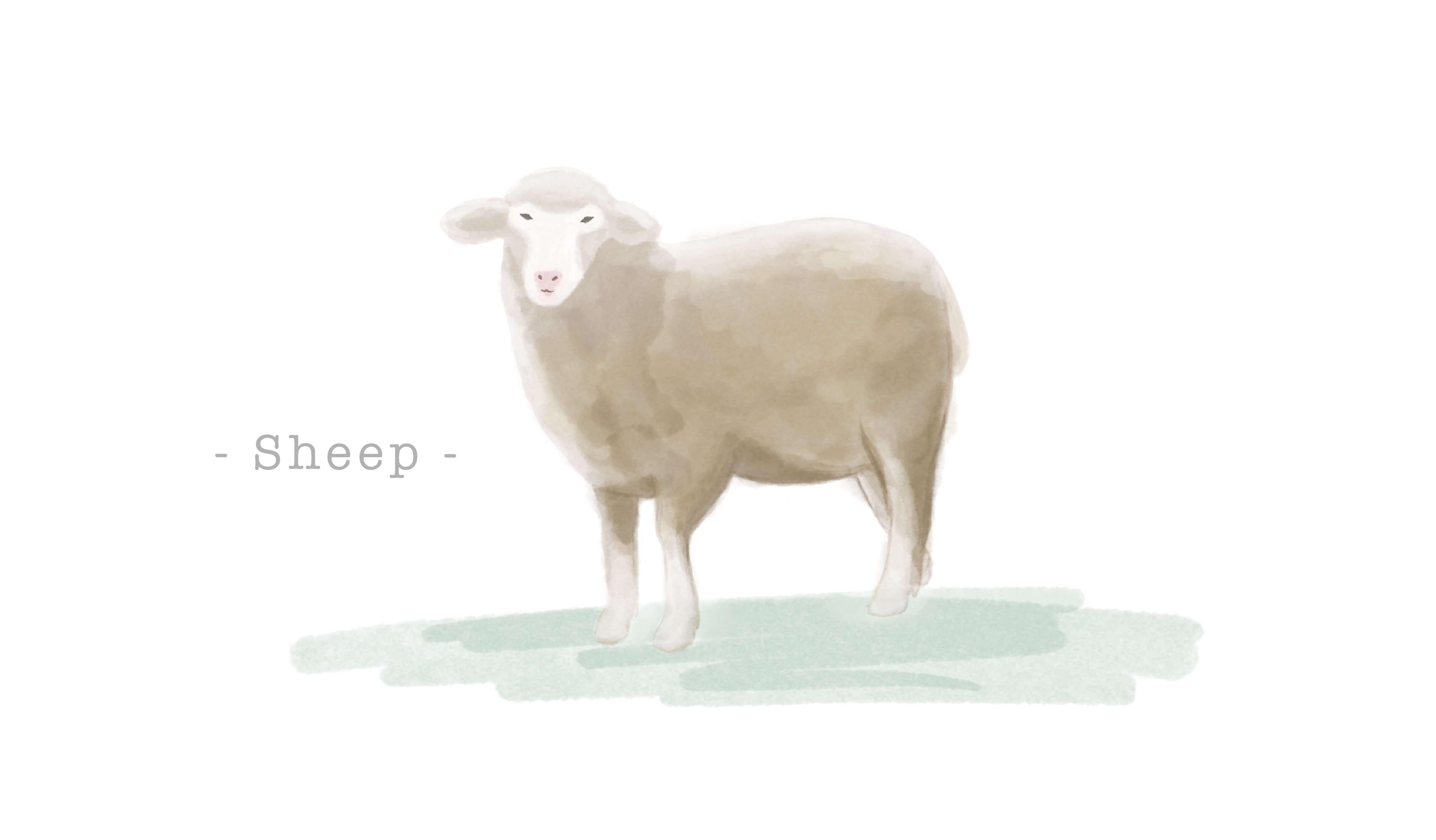羊革(シープスキン)