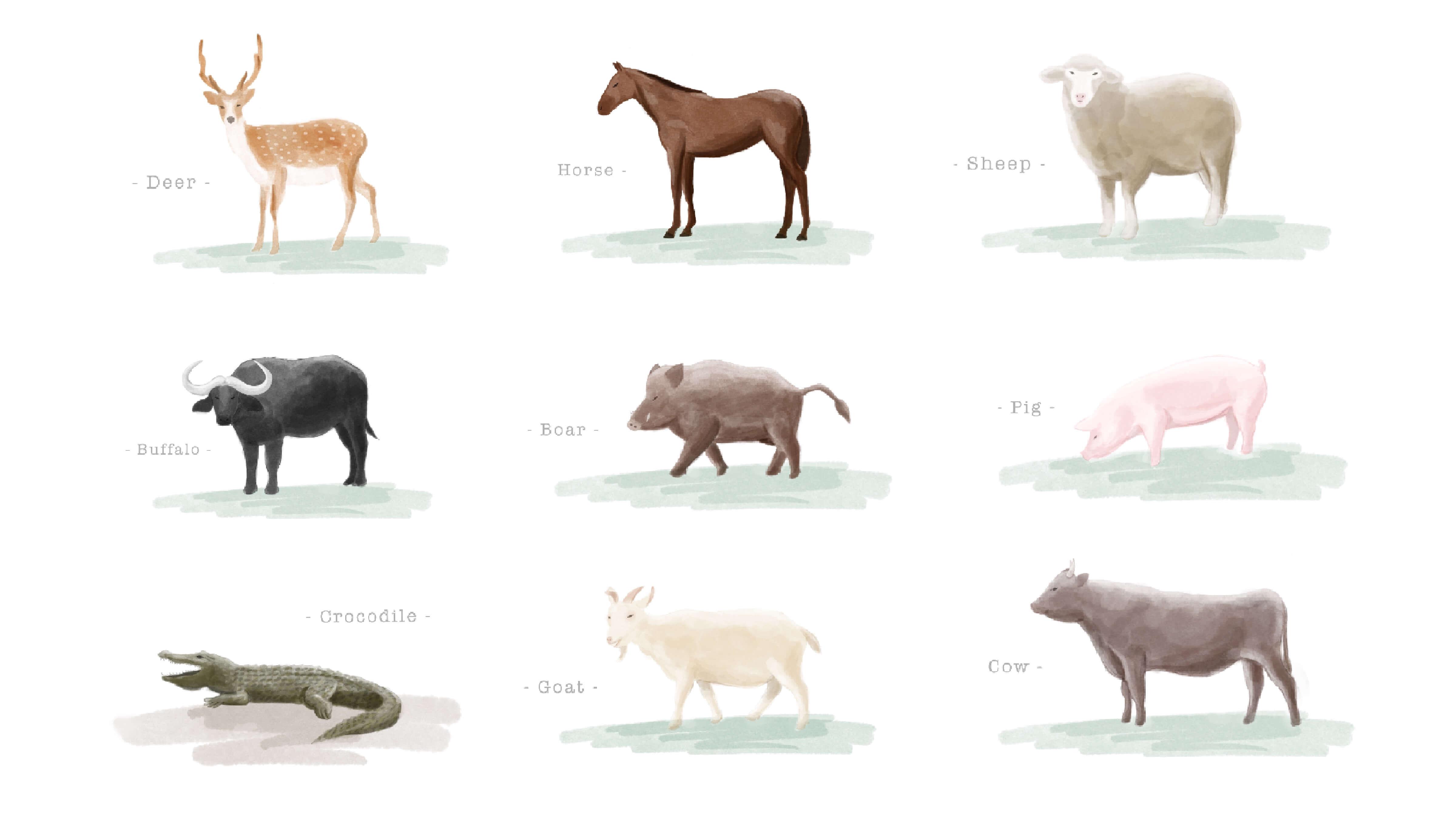 さまざまな動物の革